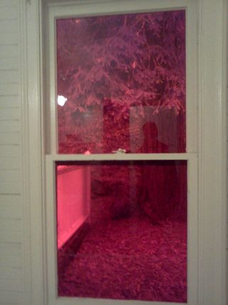 Helena's Red Bathroom Window
